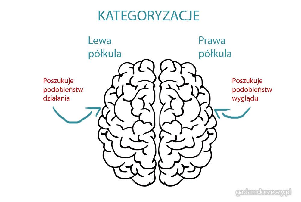 Kategoryzacje tematyczne mózg